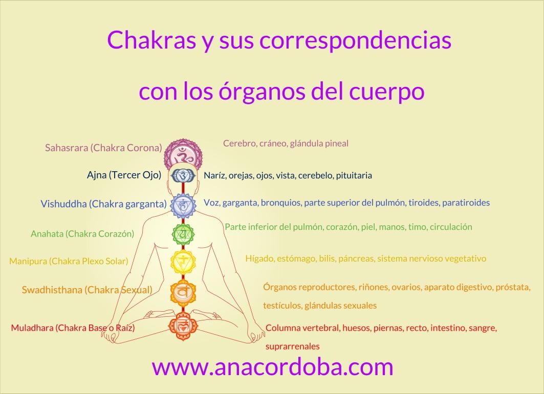 CHAKRAS Y ORGANOS DEL CUERPO - Ana Cordoba