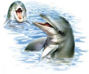 reiki delfines